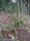 中井戸からDSCN2940