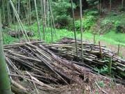 残された竹山